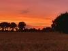 Dzwierszno Male Sunset